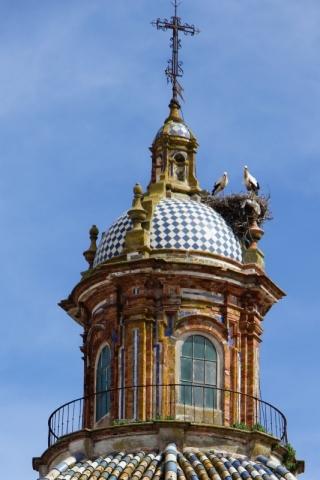 Störche auf der Kuppel der Iglesia San Pedro in Carmona