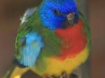 Rainbow Jungle / Kalbarri