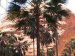 Mini Palm Gorge im Bungle Bungle NP