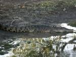 Kroko - Freshi im Yello Water River / Kakadu NP