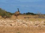 Nichts wie weg - Teil 1 / Emu