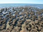 Stromatolithen / Hamelin Pool