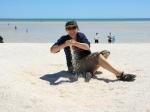 Shell Beach / Shark Bay NP