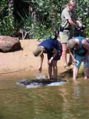 Rochenfütterung im Northern Territory Wildlife Park