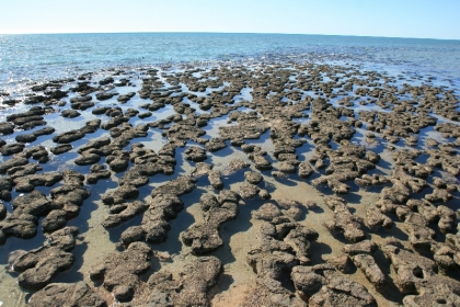 Stromatolithen - die ältesten Lebewesen der Welt