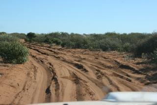 Noch mehr Sandpiste im Francois Peron National Park