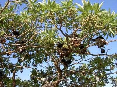 Muddenbirds auf Heron Island