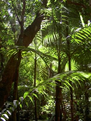 Satt-grüner Regenwald
