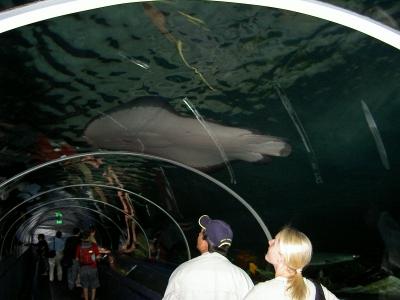 Im Aquarium von Sydney
