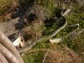 Schlange am Wegesrand