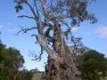 Herb Family Tree
