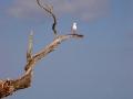 Auf Heron Island