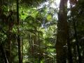 Urwald auf Fraser Island