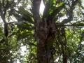 Regenwald in Mossman