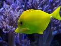 Impressionen aus dem Aquarium Barcelona
