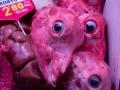 Impressionen aus dem Mercat de la Boqueria