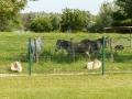 Esel bei Truchère