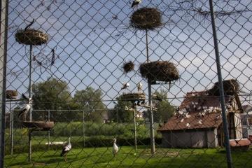 Vogelvolière mit Störchen in Betschdorf