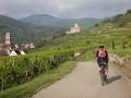 per Rad durch die Weinfelder von Kientzheim nach Kaysersberg