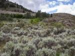 Wüste mit Rabbitbushes und Sagebrushes