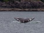 Whalewatching
