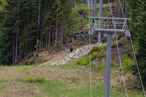 Der kleine schwarze Fleck in der Bildmitte ist unser erster freilebende Bär in Kanada