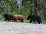 Die drei Baby-Bären