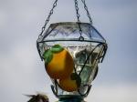 Hummingbird an der Futterstelle (Zuckerwasser)