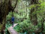 Rainforest Trail