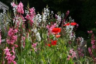 Im Candie Garden