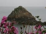 Vogelinsel vor Herm