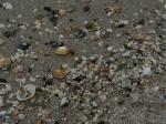 Shell Beach auf Herm - vorher