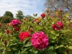 Rosen im Samarès Garden