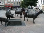Ein Denkmal für das berühmte Jersey Rind - mitten in St. Helier