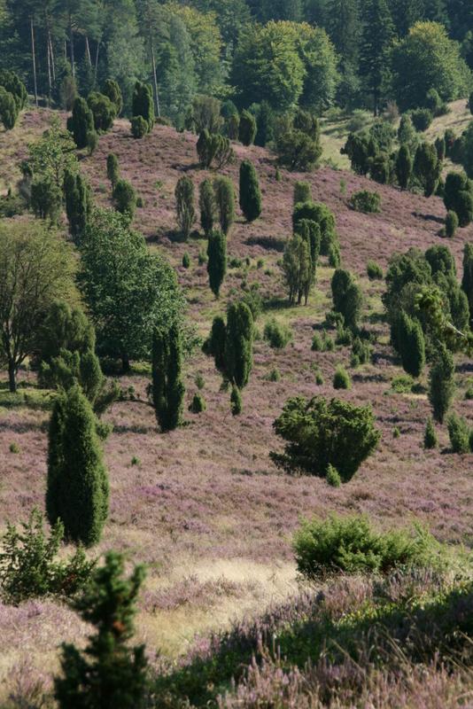 Heidelandschaft auf der Wanderung zum Wilseder Berg