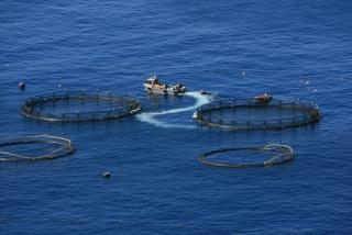 Fischaufzuchtsbecken