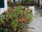 Auch hier gibt es Kübelpflanzen