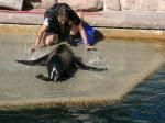 Tierpark Nürnberg - Robbenshow