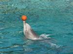 Tierpark Nürnberg - Delphinshow