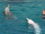 Tierpark Nürnberg - Tanzende Delphine