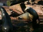 Tierpark Nürnberg - Robben