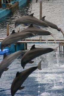 Delphinshow